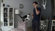 Най-гальовната котка
