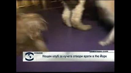 Нощен клуб за кучета отвори врати в Ню Йорк
