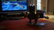 Kуче което кара скейт, играе много добре на Wii