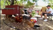 Диня експлодира и плаши пилета