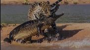 Шокиращи животински битки заснети на камера