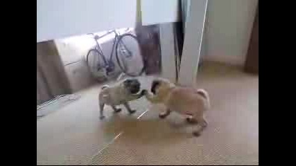 Тъпо Куче