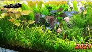 My aquariums - 2021