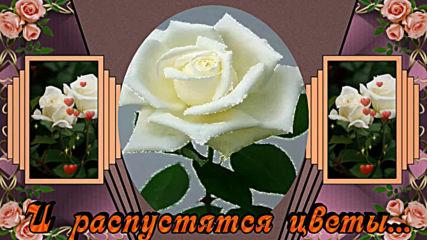 Пожелание. Прими в подарок эти розы .
