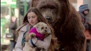 Гладна мечка стряска хората в Ню Йорк