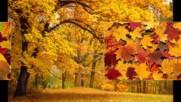 Muzыka dlia dushi - Legran Osenniaia grusty Saksofon Michel Legrand autumn sadness Populiarnoenaiutu