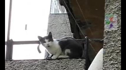 Вечно учудена шуменска котка