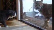 Безстрашна Котка срещу Рис