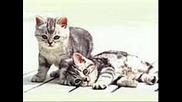 Сладки Котенца