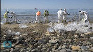 Scientists Warn of Damage to Offshore Ecosystem After Coastal Oil Spill