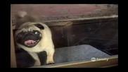Най - Смешните животни на Америка (10 минути смях)