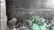 Деца снимаха загадъчно същество в изоставена градина