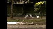 Joga Banito Tv Eric Cantona