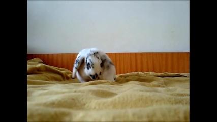 Мини зайче се чисти и си облича пижамката преди лягане