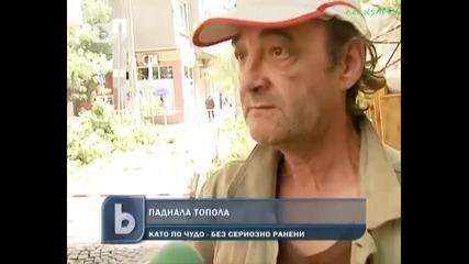 """Паднало дърво в центъра на София """"даже се напиках два пъти"""""""