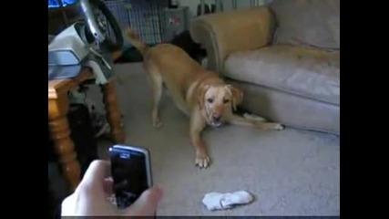 Куче се плаши от телефон