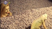 Магда - Жълтата клюка