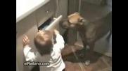 Спор Между Куче И Бебе