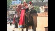 Жега мори слоновете в Индия