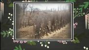 Производство на био плодове, био зеленчуци и овощен посадъчен материал - Комосс Оод