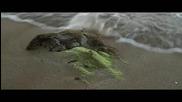 Moonbeam and Mondstrahl - Foxy ( Shant & Shane Koian Winner Remix )