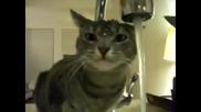Котка е готова на всичко за да пийне малко вода