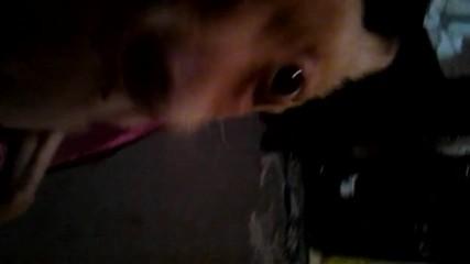 моето бебе пинч и големият лоша котарак