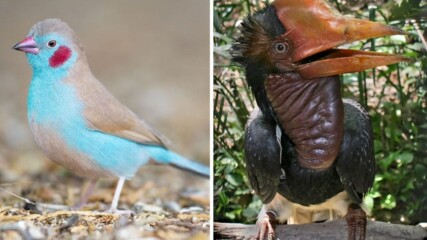 10 екзотични птици, за които не знаехте