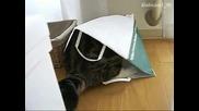 Лудото коте се приготвя да спи в торба