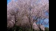 Пролет - Мариза Саниа (превод)