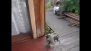 Руско куче носи коте към вкъщи