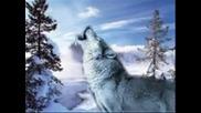 bate pe6o feat. Tina - Wolf