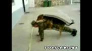 Един войник, едно куче и много много смях