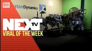 NEXTTV 023: Viral of the Week