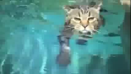Смешни моменти с котки - Компилация (2013-2014)