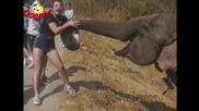 Смешни животни - Най-добротo от слоновете