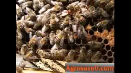 Пчелата Майка