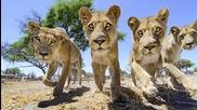Ето как се правят качествени снимки на животните от саваната