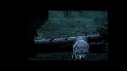 Вълци вилнеят в Москва - Fake