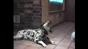 Говорещи Кучета - - - - - Talking Dogs