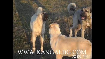 http://www.kangalbg.com/