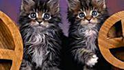 Котенца Умници Детска Песничка