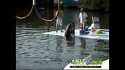 И на делфина му се