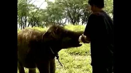 Индонезия приветства бебета слончета