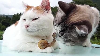 Две котенца и охлюв