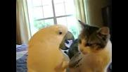 Oгромен папагал гали по много странен начин Котка (много смях)
