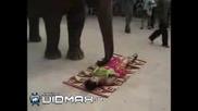 Възбуден Слон Опипва Момичета - Вижте Сами