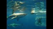 Чудовищни Акули