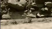 Вървейки С Чудовища Животът Преди Динозаврите Епизод 3 Част 2