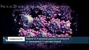 Повече от 4 милиона души са починалите от коронавирус в световен мащаб